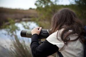 Birdwatching Tours, May 2012